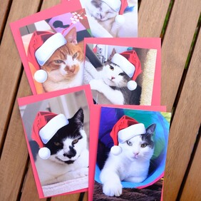 Christmas cards - set of 5
